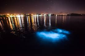 The Luminous Lagoon Falmouth Jamaica
