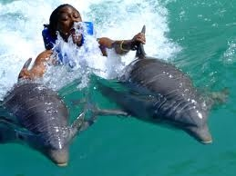 Tour To Dolphin Cove From Montego Bay Jamaica