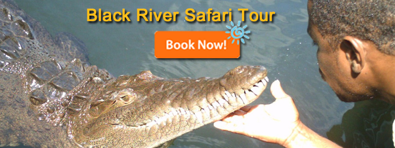 Black River Safari Tours Jamaica