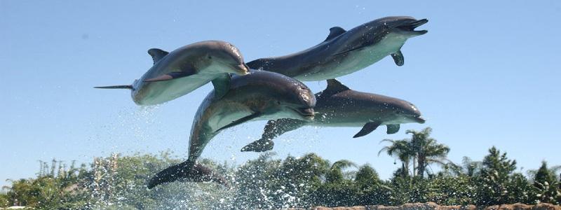 dolphn.jpg