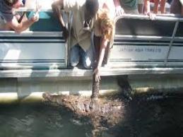 Black River Safari Tour From Montego Bay Cruise Ship Port